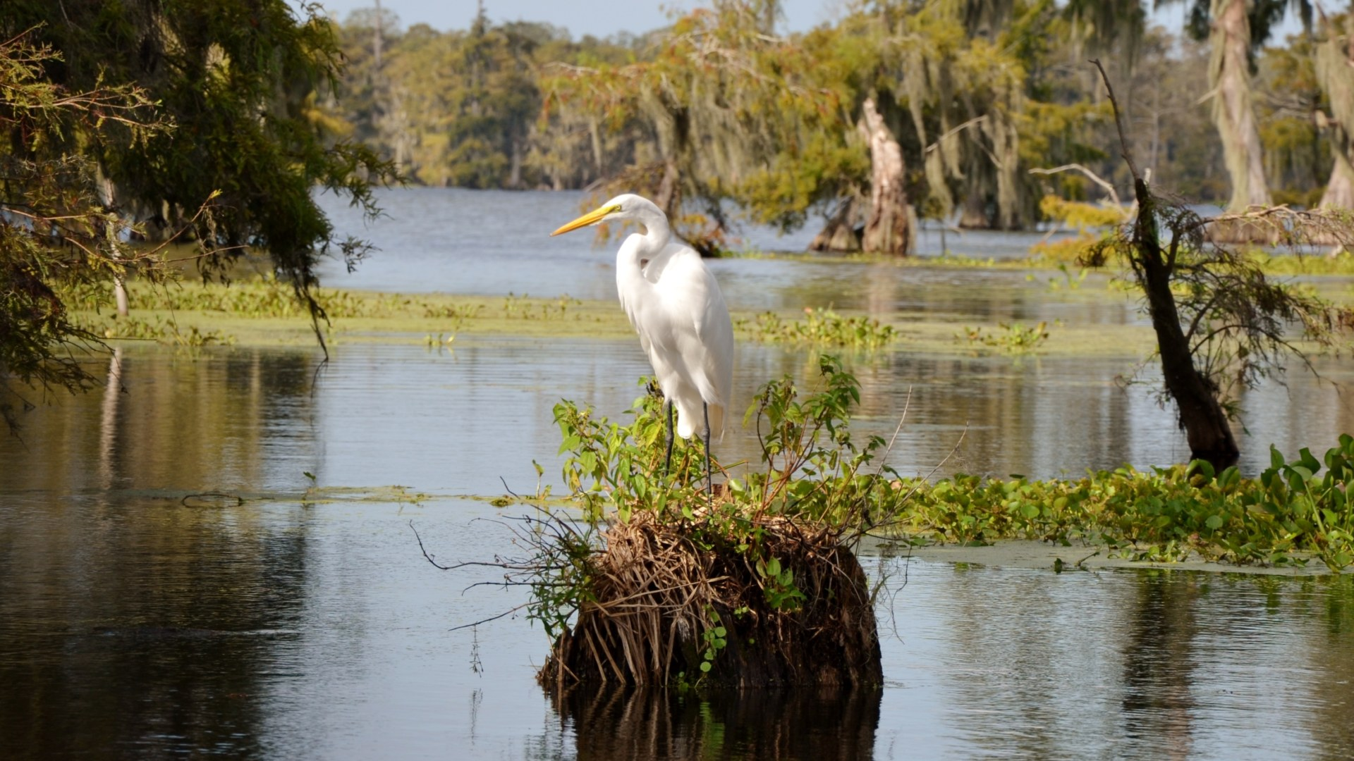Ile Aux Oiseaux Un Tres Fragile Ecosysteme Maya Mexique Decouverte