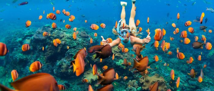 Snorkelling mexique- mexique decouverte