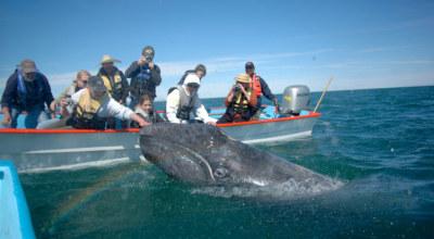 Baleine Mexique