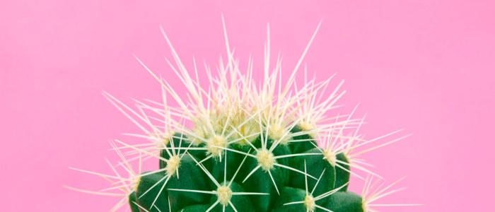 Cactus Mexique Decouverte