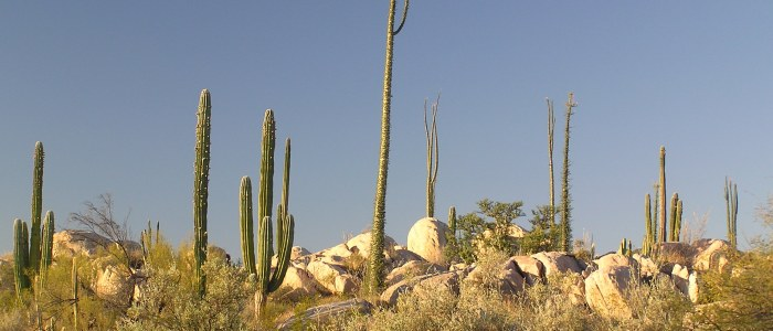Catavina Basse Californie Mexique