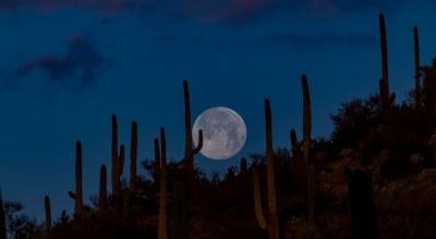 equinox_lune_nuit_desert_cactus