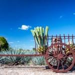 hennequen charrue mexique- mexique decouverte