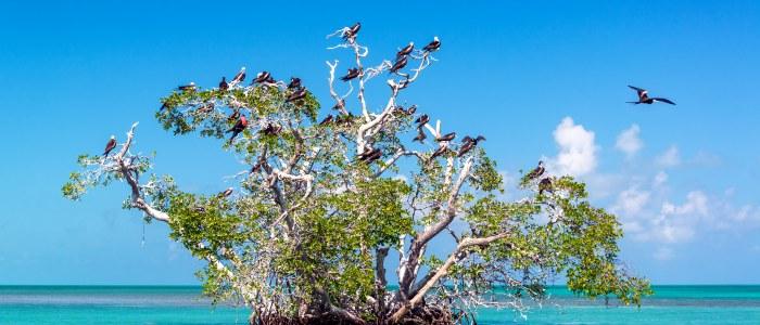 ile oiseaux mexique- mexique decouverte