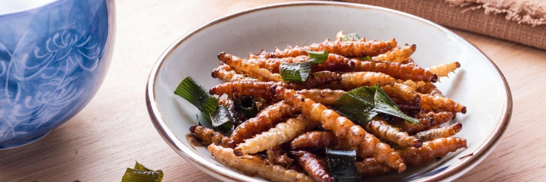 insectes_gastronomie