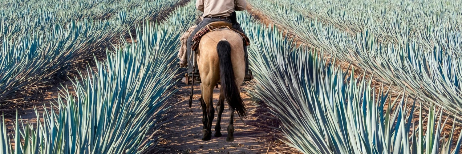 Tequila Agave Mexique