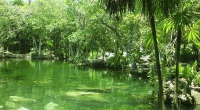 Jungle Yucatan Mexique