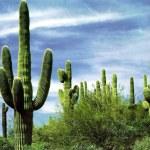 Avis voyageur au Mexique Gerard E.