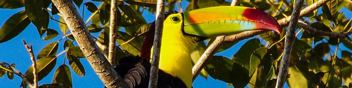 Palenque-mexique découverte
