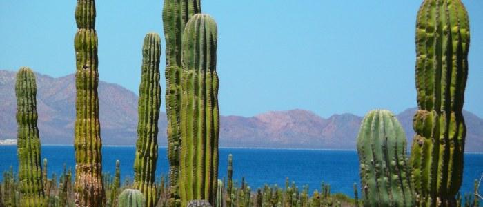 Rancho Cactimar Cactus Basse Californie