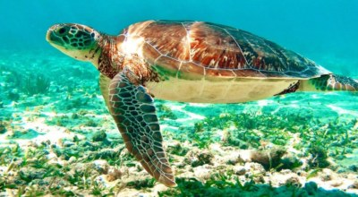 Tortue Mexique