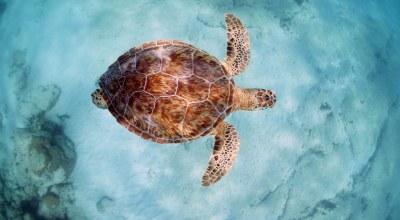 tortue_ocean_akumal