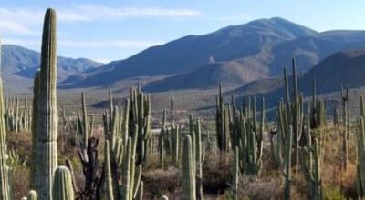 Desert Tehaucan Mexique
