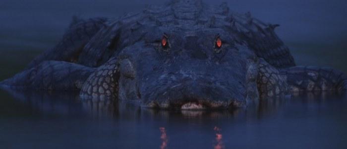 Crocodile de nuit Mexique