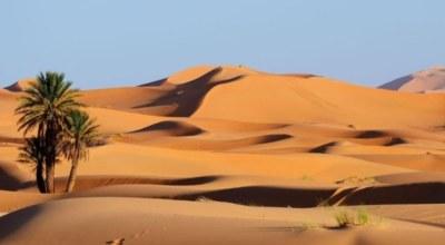Desert Sahara sargasse
