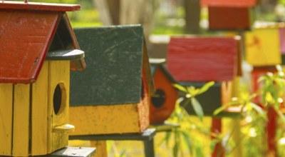 cage oiseaux mexique decouverte