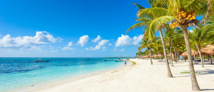 plage palmier caraíbes mexique mexique decouverte